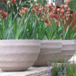 Il giardinaggio come terapia